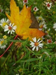 The ABCs of SAD – Seasonal Affective Disorder